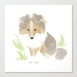 Shaded Sable Sheltie Canvas Print