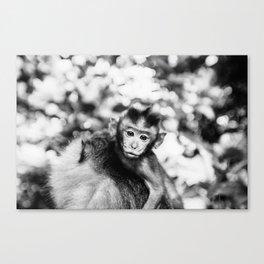 Monkey Pucker Canvas Print