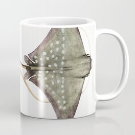 Spotted Eagle Sting Ray (Myliobatis maculatus) from Illustrations of Indian Zoology (1830-1834) by ( Coffee Mug