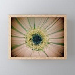 Gerbera Daisy Framed Mini Art Print