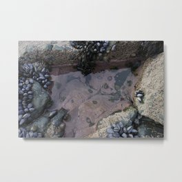 Pink Ocean Rock Pool with Mussels Metal Print