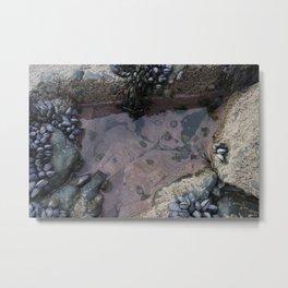 Pink Ocean Rock Pool with Mussels Metal Print