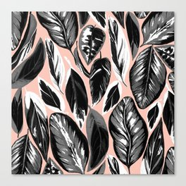 Calathea black & grey leaves with pale background Canvas Print