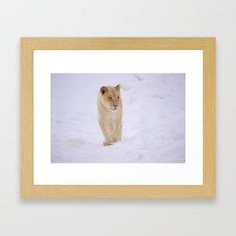 Lion In Winter Framed Art Print