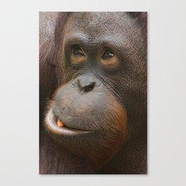 Orangutan Face Canvas Print