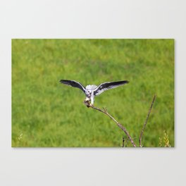 Dinner is Served. Canvas Print