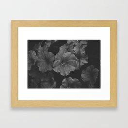 Boston Flower Framed Art Print