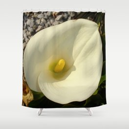 Single Cream White Calla Lily With Garden Background Shower Curtain