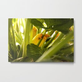 Zuchini Blossom Photography Print Metal Print