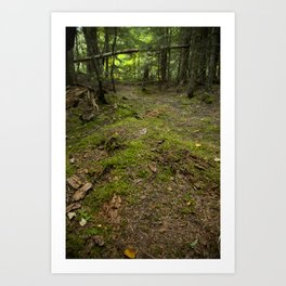 Forest Peace Art Print
