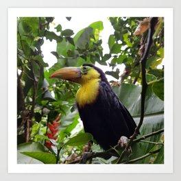 Tucan costa rica bird Art Print
