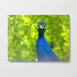 Peacock is watching you Metal Print