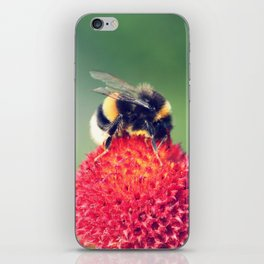 Bumble Bee on a Red Blossom iPhone Skin