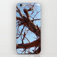 Juniper iPhone Skin