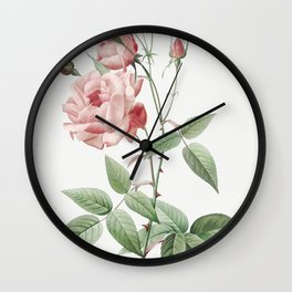 Old Blush China also known as Common Rose of India (Rosa Indica Vulgaris) from Les Roses (1817-1824) by Wall Clock