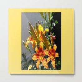 Orange Day Lilies & Buds  Flower Garden Metal Print