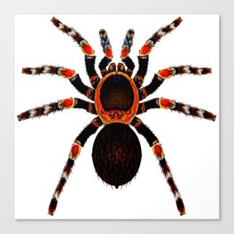 Spider Red And Black Canvas Print