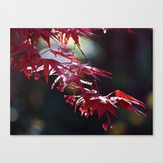 Acer Canvas Print