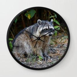 Diurnal Raccoon Poses on the Gravel Wall Clock