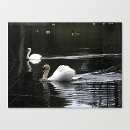 Swans at the pond Canvas Print