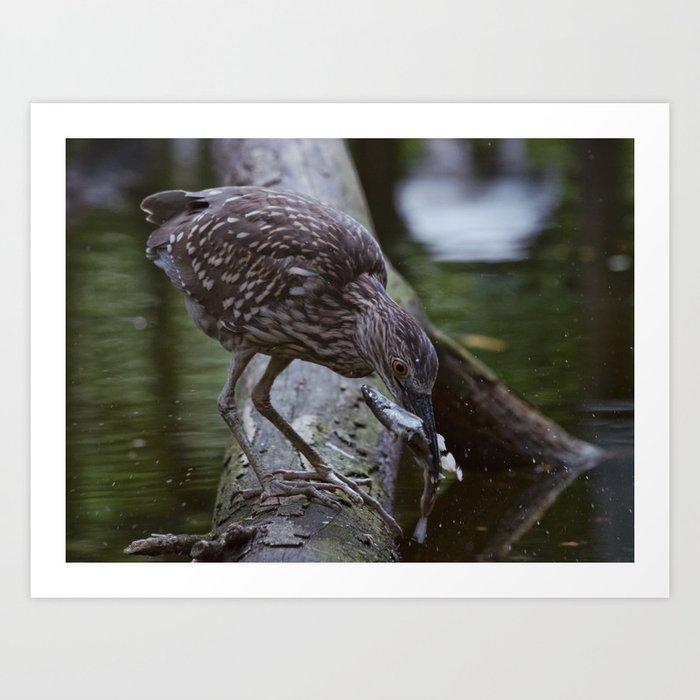 Heron Hunt Art Print