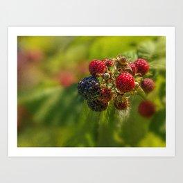 Rasberry Harvest Art Print