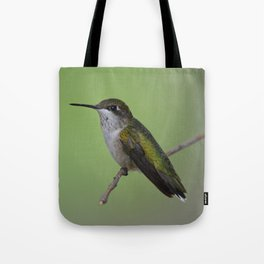 Ruby Throated Humming Bird At Rest Tote Bag