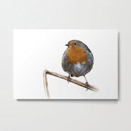 Robin red breast wildlife birds Metal Print