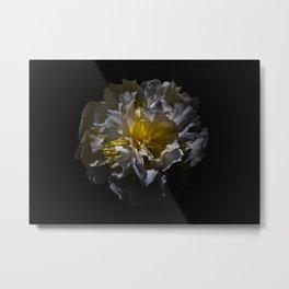 Backyard Flowers 25 Color Version Metal Print