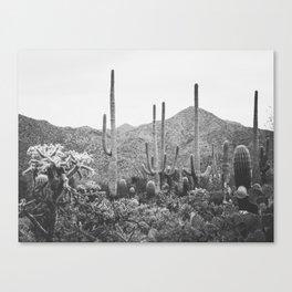 A Gathering of Cacti, No. 2 Canvas Print