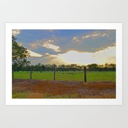 Cattle at Sunset in Texas  Art Print