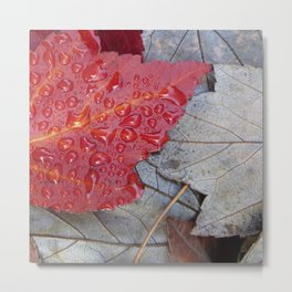 Red Sunset Maple Leaves Metal Print