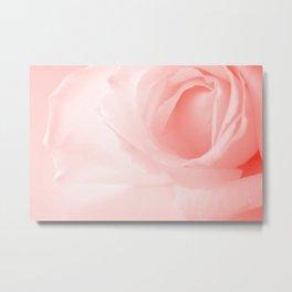 Coral Rose Close-up Metal Print