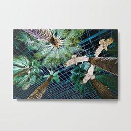 Looking up at Palm trees. Metal Print