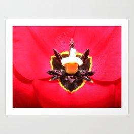 Tulip Eyes Art Print