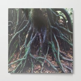 Gnarly Tree Roots. Metal Print