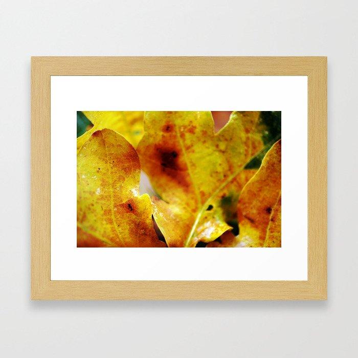 Autumn leaves print. Framed Art Print