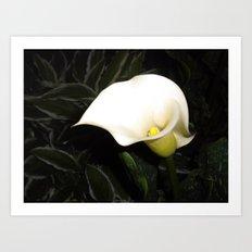 Calla Lily at Night Art Print