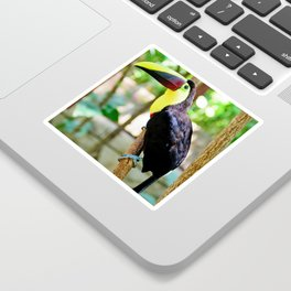 Yellow-Throated Toucan Sticker