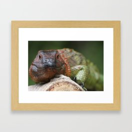 Colorful Iguana Framed Art Print