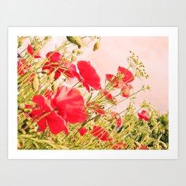 Poppies of Rememberance Art Print