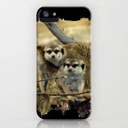 African Meerkat Trio iPhone Case
