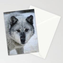 Lone wolf roams the Canadian Rockies Stationery Cards
