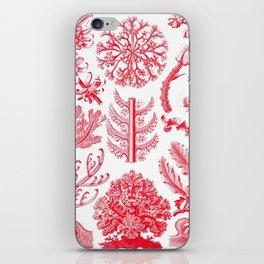 Ernst Haeckel Florideae Red Algae iPhone Skin
