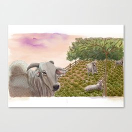 Boiada Canvas Print