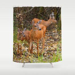 A Trio of Blacktail Deer in the Forest Shower Curtain