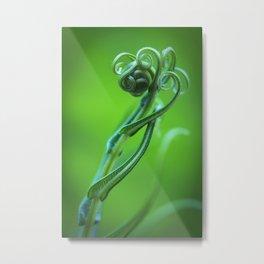 Macro photograph of new tendrils on a green fern. Metal Print