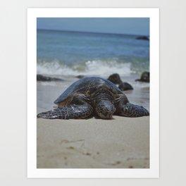 Sea Turtle Life Art Print
