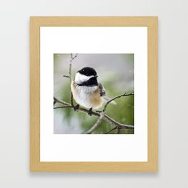 Chickadee Bird Framed Art Print