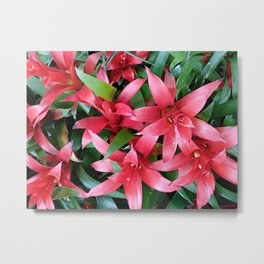Red guzmania tropical flower Metal Print